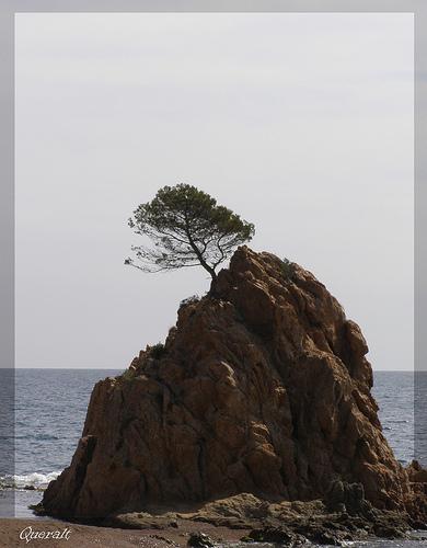 El Pi de Formentor, de Queralt