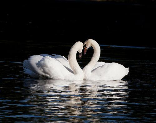 Lovers, de Steve-h