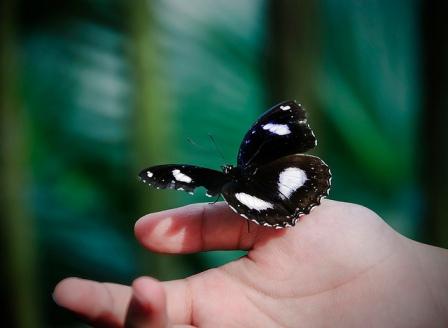 Let The Butterfly Fly (DSC_0172), de Schristia, al Flickr