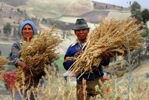 Fairtrade Quinoa, de Dider Gentilhomme, a la Viquipèdia