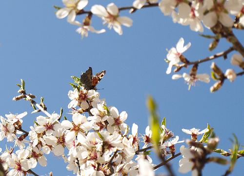 Papallona, de Queralt jqmj, al Flickr