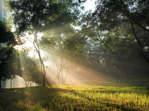 Sunshine 4, de Mark Lee, al Flickr