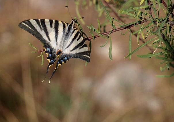 Papallona, de Victor, al Flickr