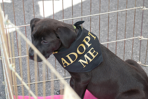 Support Pet Rescues, de Ed Bierman, al Flickr
