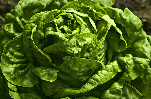 """Lettuce"", de Liz West, al Flickr"