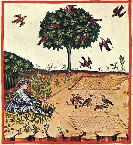 34 caccia tortore,Taccuino Sanitatis, Casanatense 4182, Viquipèdia