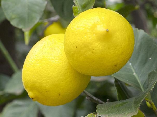 """Lemons"", de Dwayne Madden, al Flickr"