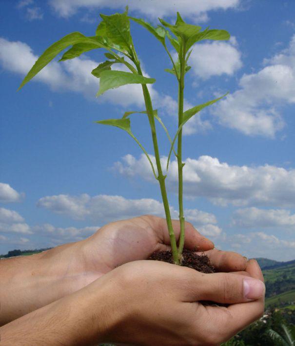 Ecologia, de Danilo Prudêncio Silva. Viquipèdia