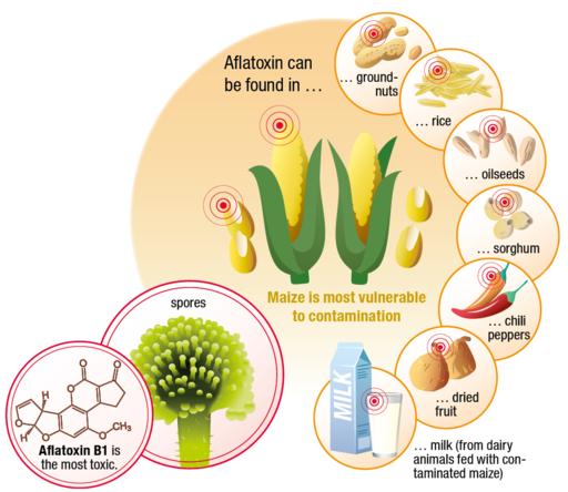 """Aflatoxin Infographic"", Bühler Lumovision"