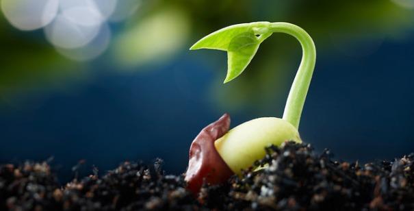 """Seed"", de U S Department of Agriculture, al Flickr"