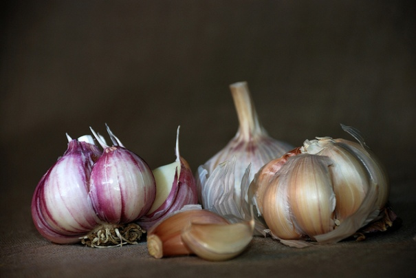 """Garlic"", de Olga Filonenko, al Flickr"